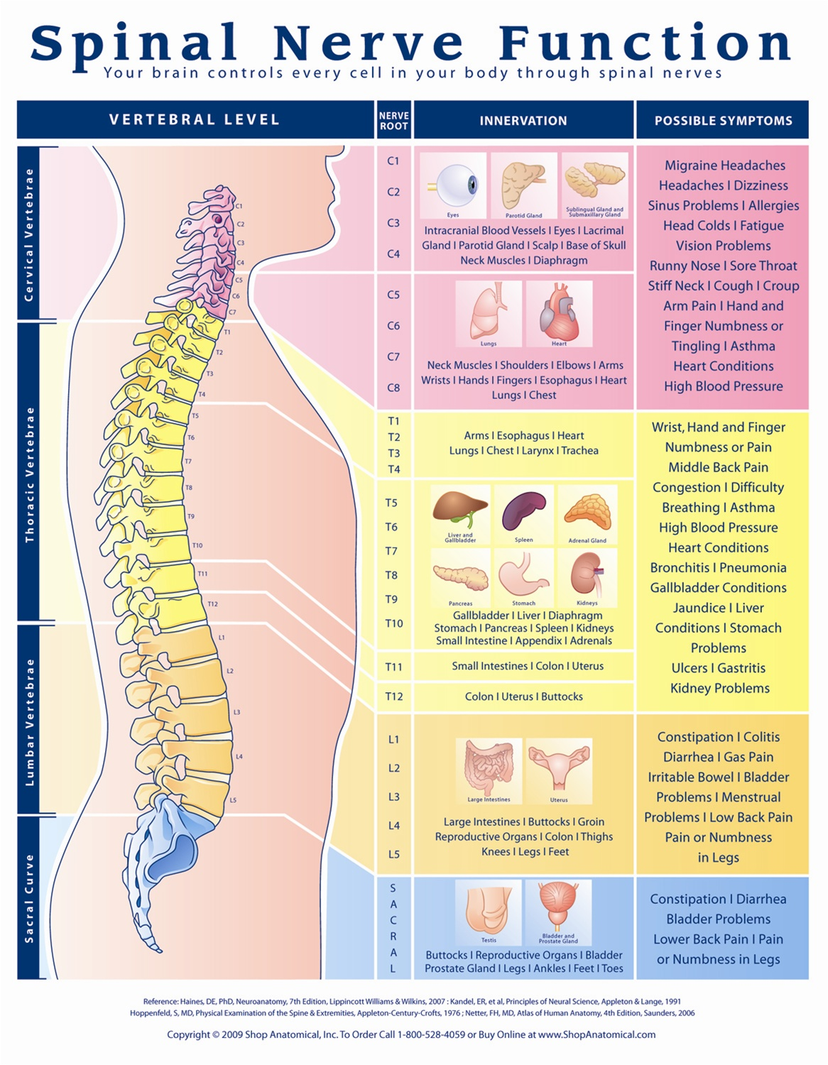 Spinal nerve function anatomical chart anatomy models and