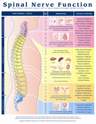 Spinal Nerve Function Anatomical Chart