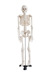 Mini Human Skeleton Model on Metal Base