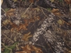 "4 YARDS - Mossy Oak Headliner Cloth <br>(Foam Backed - 144"" x 60"")"
