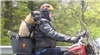motorcycle pet carrier for big dogs