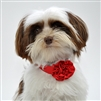formal rosette with matching band for dogs