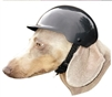 dog motorcycle biker helmet