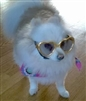 heart shaped sunglasses for dogs