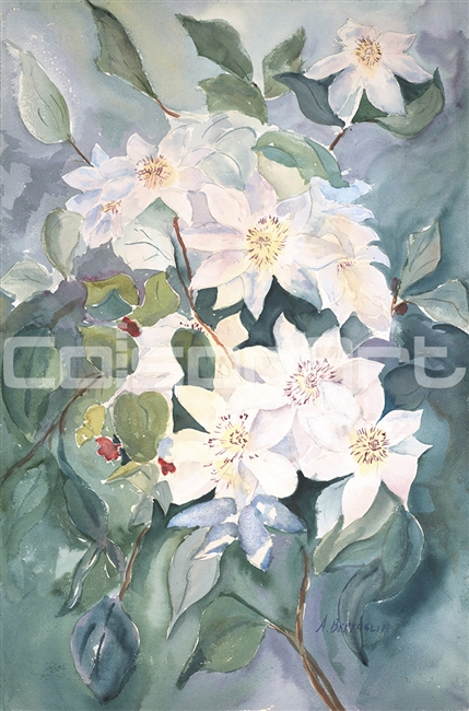 Anthony Bertuglia White Clematis