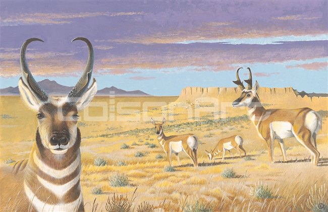 Ben Culverhouse Pinedale Pronghorns