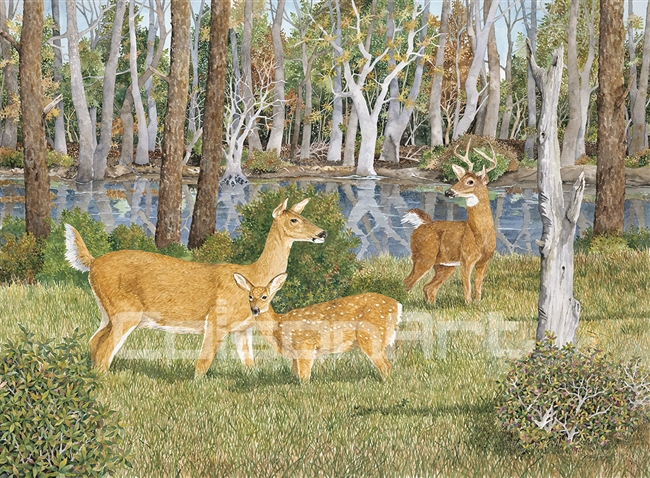 Randy Gibbs Still Pond Deer