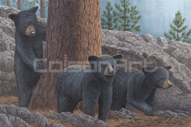 Black Bear Cub Trio by Jeffrey Hoff