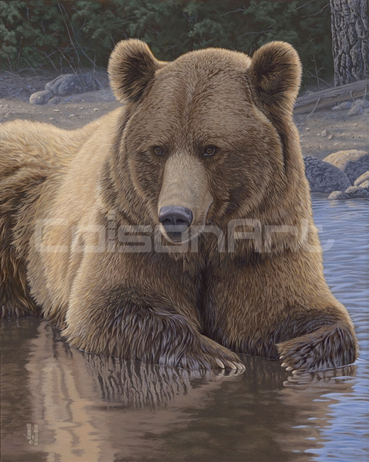Cool Down Grizzly by Jeffrey Hoff