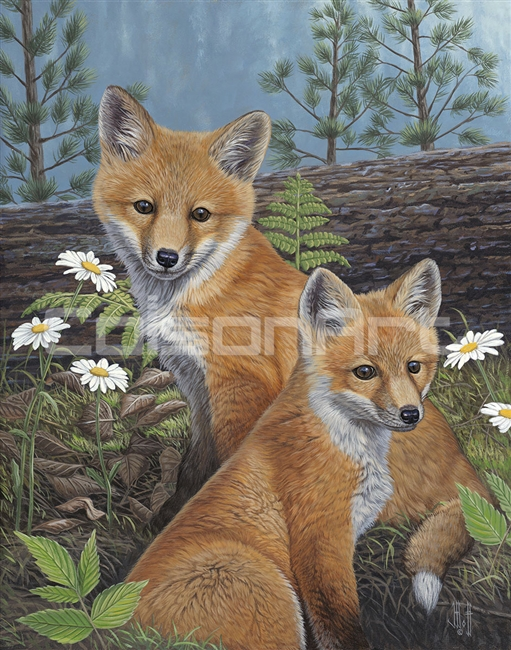 Summertime Fox Kits by Jeffrey Hoff