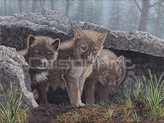 Wolf Pup Trio by Jeffrey Hoff