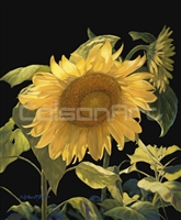 Sunflower Brilliance by D. Arthur McBride