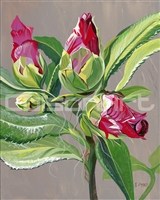 Camellia Buds by Earle McKey