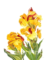 Canna Plants by Earle McKey