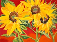 Sunflower 1 by Earle McKey