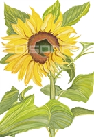 Sunflower A by Earle McKey