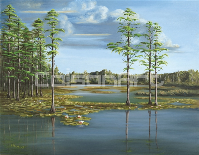 Carolyn Stephens Evening on Cypress Pond