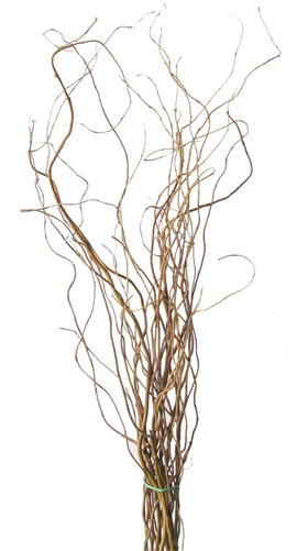 CURLY WILLOW FRESH  WOOD SCARLET CURLS WILLOW BRANCHES