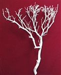 "White Manzanita Branches, 24"" tall"