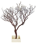 "Two Natural Manzanita Branches 36"" Tall with Bases, (Shipping Included!)"