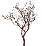 "Natural Red Manzanita Branches, 30"" Tall"