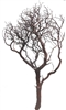 "Natural Red Manzanita Branches, 42"" Tall (case of 3, shipping included!)"