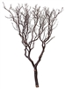 Natural Red Manzanita Trees, 60""