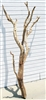 "SB Ghostwood (California Driftwood), 60"" Case of 4"