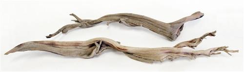 Sandblasted Ghostwood 10 Quot California Driftwood Stick
