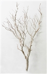 "Sandblasted Manzanita Branches, 36"" tall"