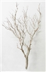 "Sandblasted Manzanita, 36"" tall (case of 3, shipping included!)"