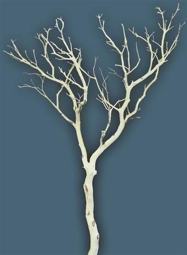 Sandblasted Manzanita Branches 48 Quot