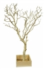 "Two Sandblasted Manzanita Branches 36"" Tall with Bases, (Shipping Included!)"