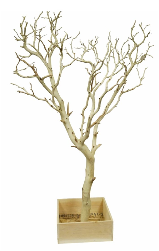Sandblasted Manzanita Branches 24 Quot Tall With Base