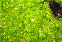 Transparent Lime Coarse Frit...Back in stock!