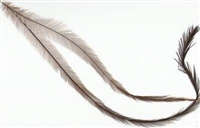 Emu Feathers - Unsorted Bulk  1 oz