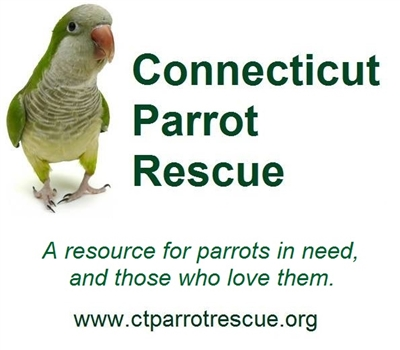 Connecticut Parrot Rescue