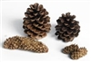 Large Pine Cone-3