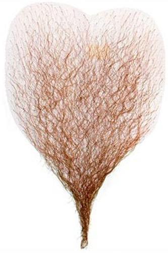 International Wigs 174 Human Hair Merkin By International Wig
