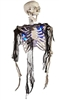 Halloween Skeleton Half Body Lifelike Halloween Prop Scary Trick or Treat