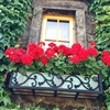 "48"" Vienna Black Wrought Iron Window Box With Flower Design"