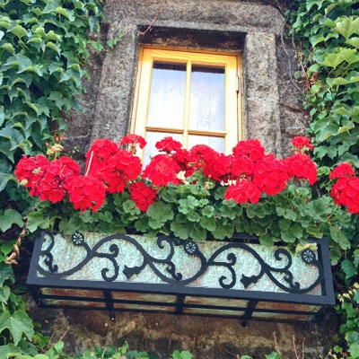 "24"" Vienna Wrought Iron Window Flower Box Design With Tarnish Green Copper Liner On Ivy Wall"