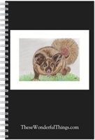 Yellow Bellied Glider Journal