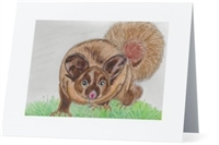 """Yellow Bellied Glider"" Note Cards"