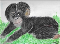 """Baby Chimp"" Zoo Print"