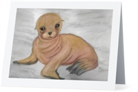 """Sea Lion"" Note Cards"