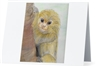 """Marmoset"" Note Cards"