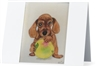 """Dachshund"" Note Cards"