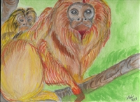 """Golden Lion Tamarin"" Zoo Print"