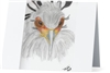 """Secretarybird #3"" Note Cards"